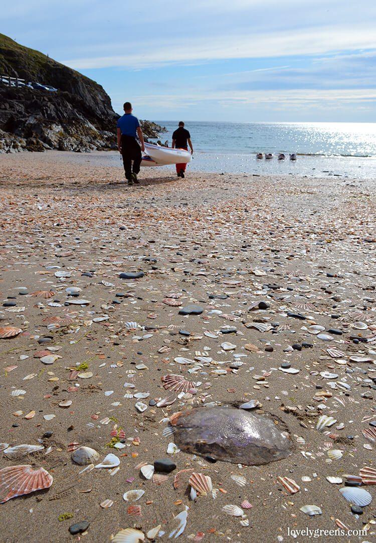 Jellyfish & Seashells on Fenella Beach • Lovely Greens
