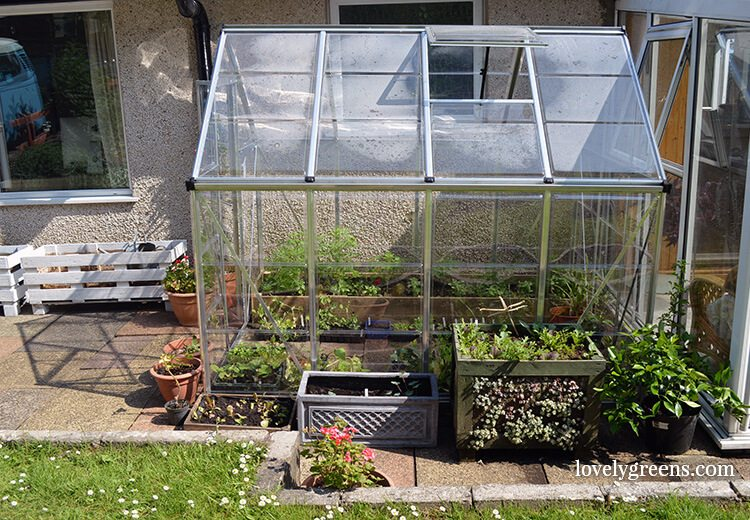 My Palram greenhouse helped me to get ahead of the cold weather in April.