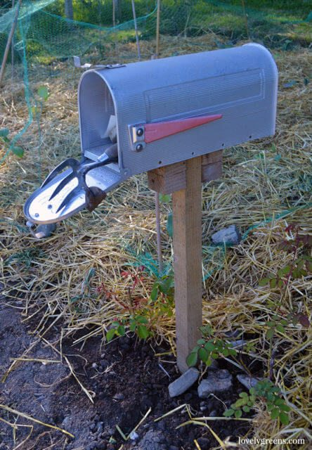 A mailbox in the garden can be used for storing tools. In my community garden I also use it to receive notes and forms from our members.