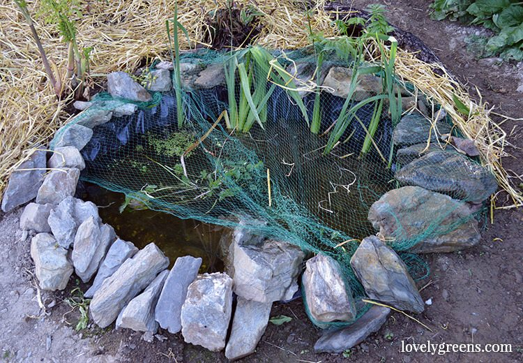 A Wildlife Pond will encourage frogs to move into your garden. Frogs eat slugs so are a great natural defense against garden pests.