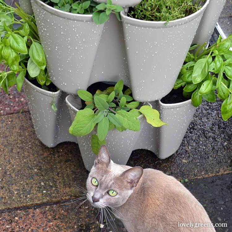 cat-planter