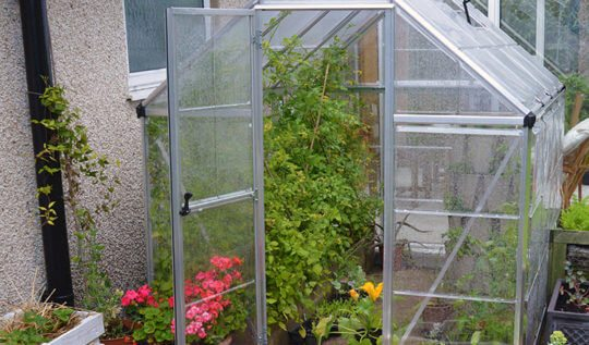 Growing salad greens and edibles in a greenhouse and container garden