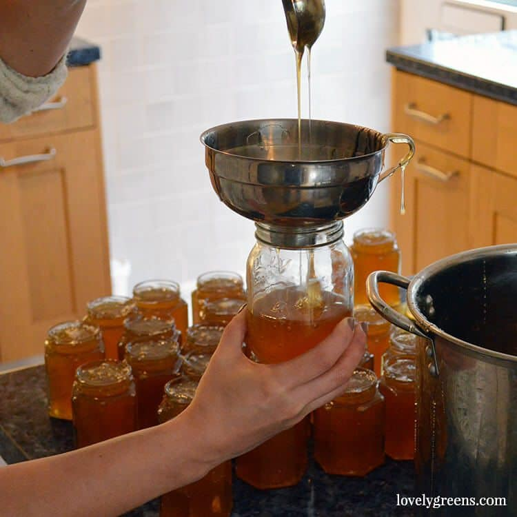 Why Vegans should eat Honey: by eating honey you're helping support honeybees and their efforts in pollinating crops. No bees, no food. It's as simple as that.