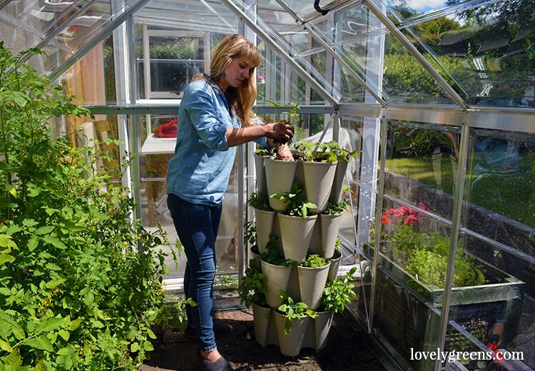 Grow a vertical herb garden in a Greenstalk stackable planter