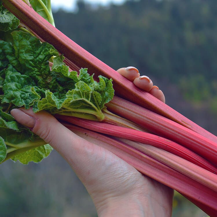 9 Creative & Delicious Rhubarb Recipes