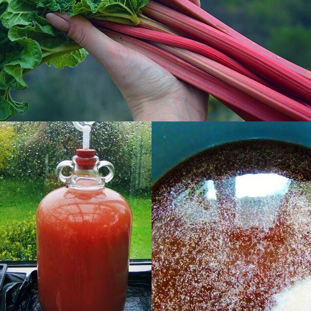 How to make fruit, flower, and vegetable wines using this A-Z list of delicious ingredients. Includes wine recipes, winemaking instructions, and a beginner's equipment list #homesteading #fermenting #winemaking