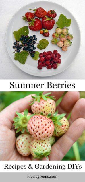 12 Juicy summer berry recipes and gardening diys