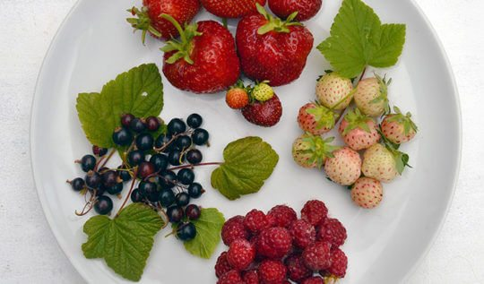12 Juicy Summer Berry recipes and DIYs
