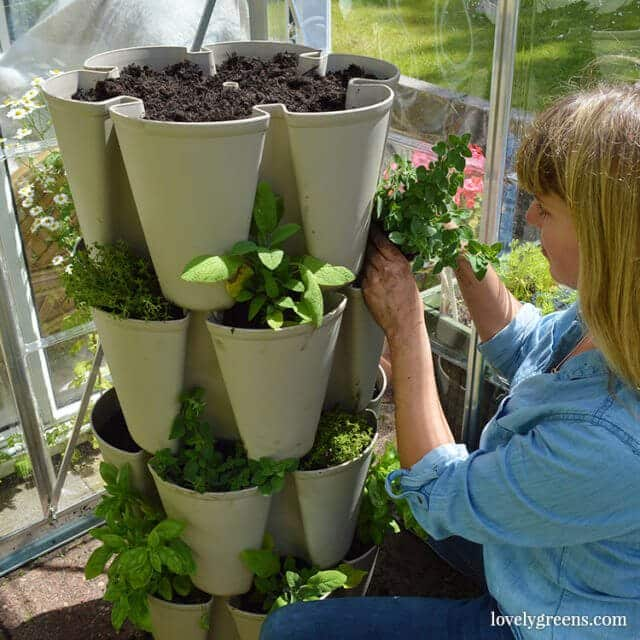 If you only have a small outdoor space, a vertical herb garden is a great way to grow food. Ideal for balconies, urban gardens, and busy people #lovelygreens #vegetablegarden #containergarden