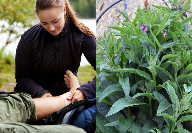 How to create a Herbal First Aid Kit for minor cuts, sprains, and injuries