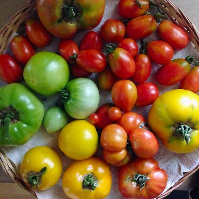 The Ultimate Guide to Growing Tomatoes