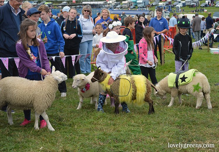 The Meg Lamb competition at the Royal Manx Agricultural Show on the Isle of Man