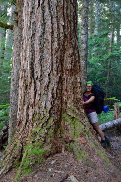 giant-tree