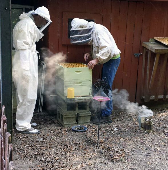 5 ways to start living your homesteading dream: backyard beekeeping
