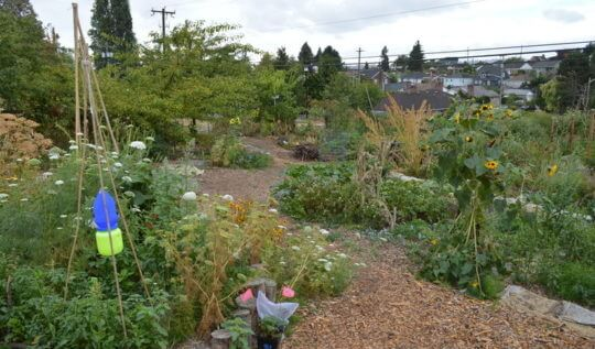 How does a public edible garden really work? A look at the Beacon Food Forest project in Seattle, Washington