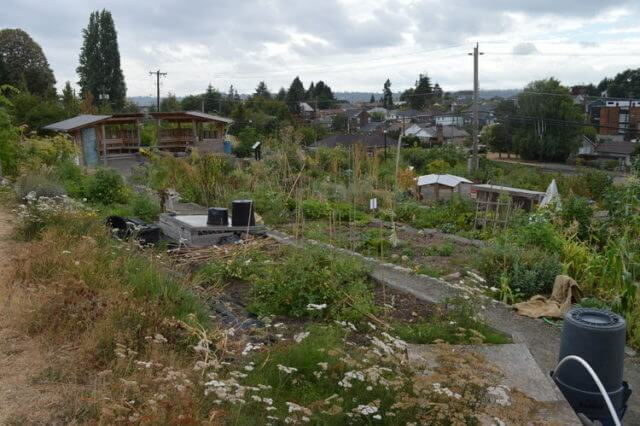 A community Food Forest and P-Patch in Seattle, USA