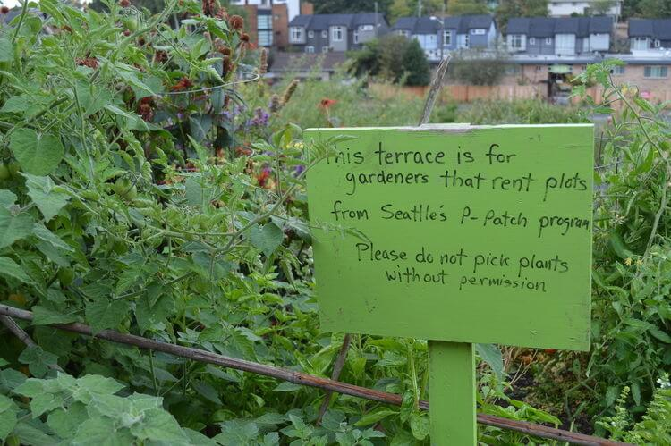How does a public food forest really work? A look at the Beacon Food Forest project in Seattle, Washington - an edible garden where anyone can pick fresh food for free.