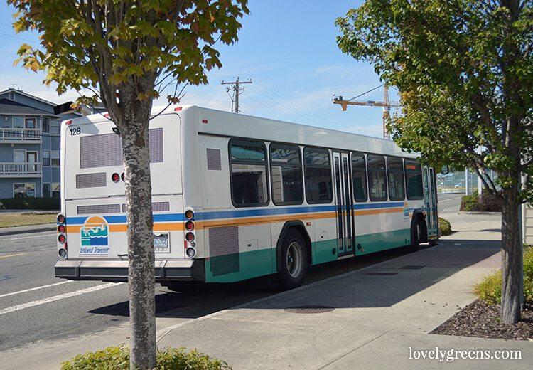 free-bus