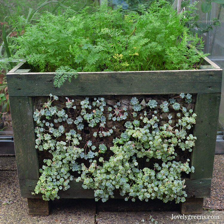 Grow on up to five sides in this DIY Cube planter