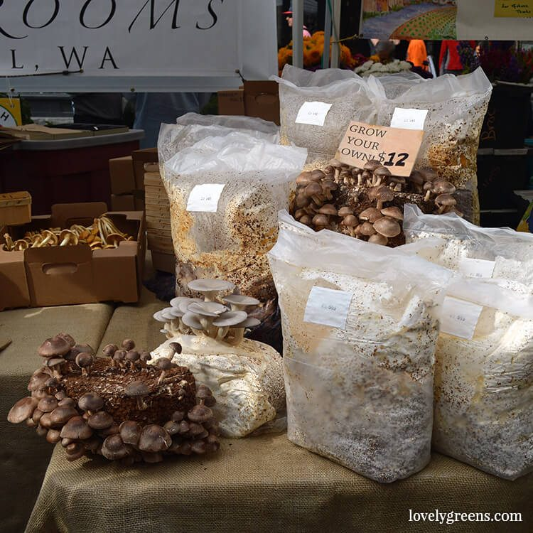 Mushroom growing kits: Visiting the Ballard Farmers Market {locally grown food-porn ahead}