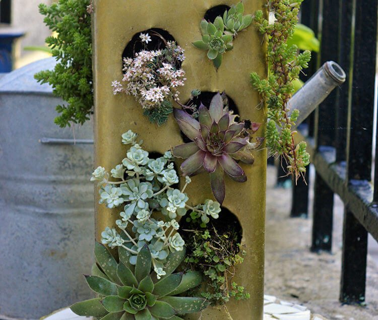 Diy Recycled Planters: DIY Recycled Succulent Planter • Lovely Greens