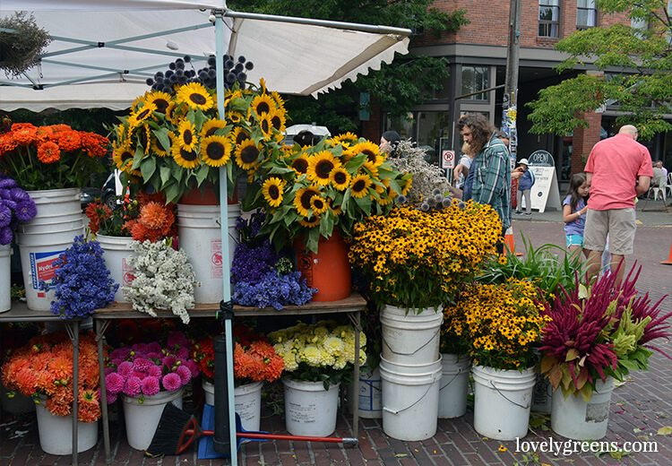 Locally grown flowers: Visiting the Ballard Farmers Market {locally grown food-porn ahead}