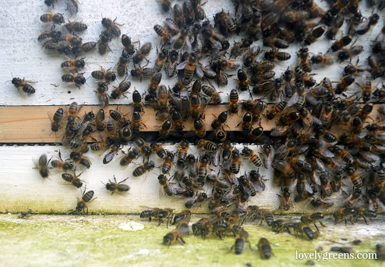 Today I am Thankful for Honeybees