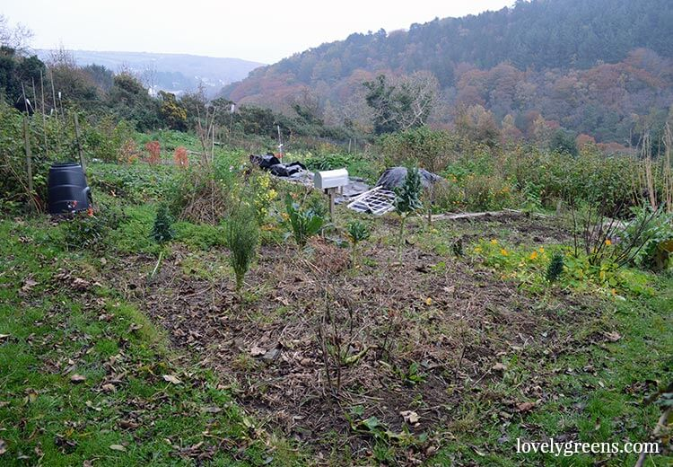 Clearing up the Allotment Garden in November