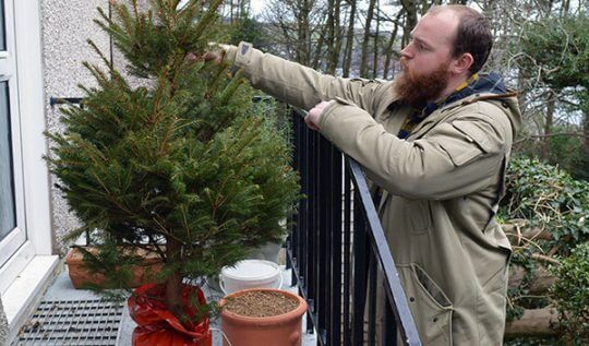 Bruce the Spruce -- our environmentally friendly and cost-saving Christmas Tree