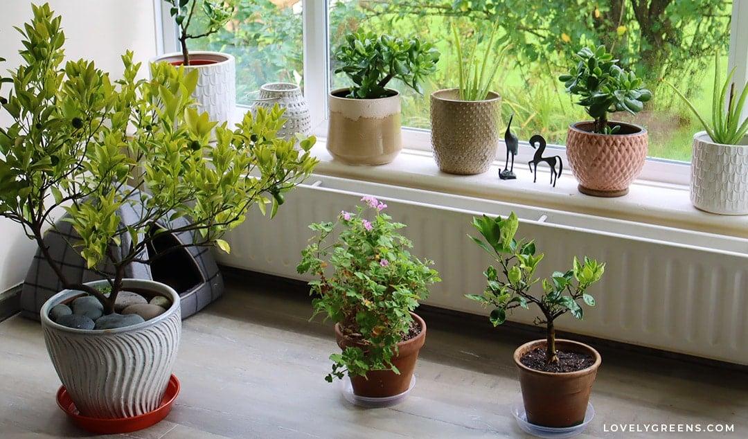 Beautiful Edible Houseplants to Grow for Food and Decor