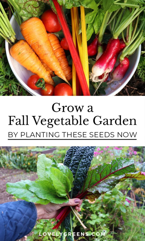 Grow a fall vegetable garden by sowing seeds for these 16 vegetables in July and August. Includes root veggies, salad greens, Asian greens, and information on sowing times, and long-day vs short-day veg #vegetablegarden #gardeningtips
