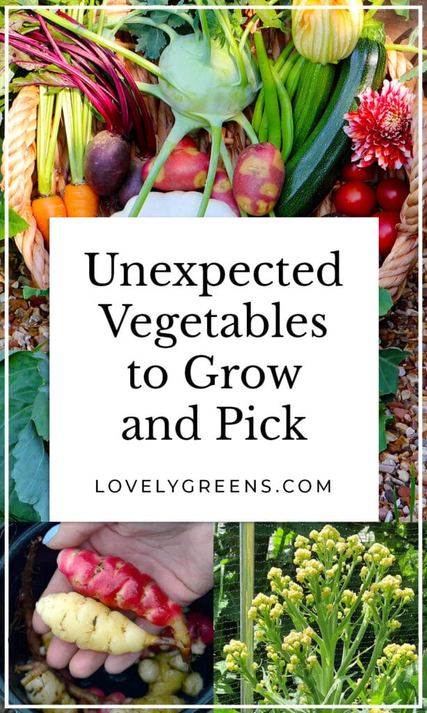 Unique crops to grow in this year's garden including vegetables from around the world, edible flowers and weeds, plants that produce food for years, and unexpected vegetables #vegetablegarden #gardeningtips #growyourownfood
