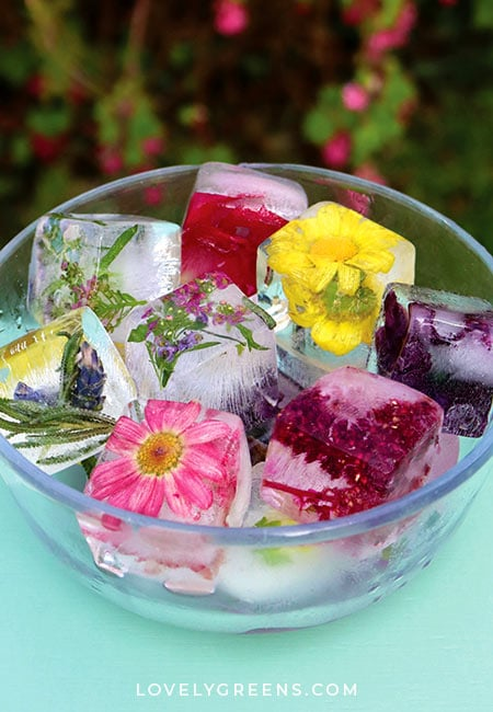 How to make edible flower ice cubes to preserve pretty blossoms for summery drinks. From the book, A Woman's Garden by Tanya Anderson #edibleflowers #plantbased