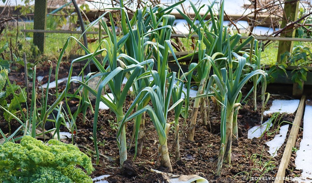 How to Plant a Winter Vegetable Garden