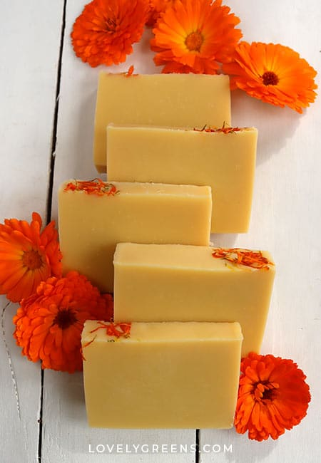 Use golden calendula flower petals to make natural yellow soap using the cold-process method. This calendula-infused oil soap recipe uses calendula petals infused in olive oil and a few other natural soap ingredients #soaprecipe #soapmaking #calendula