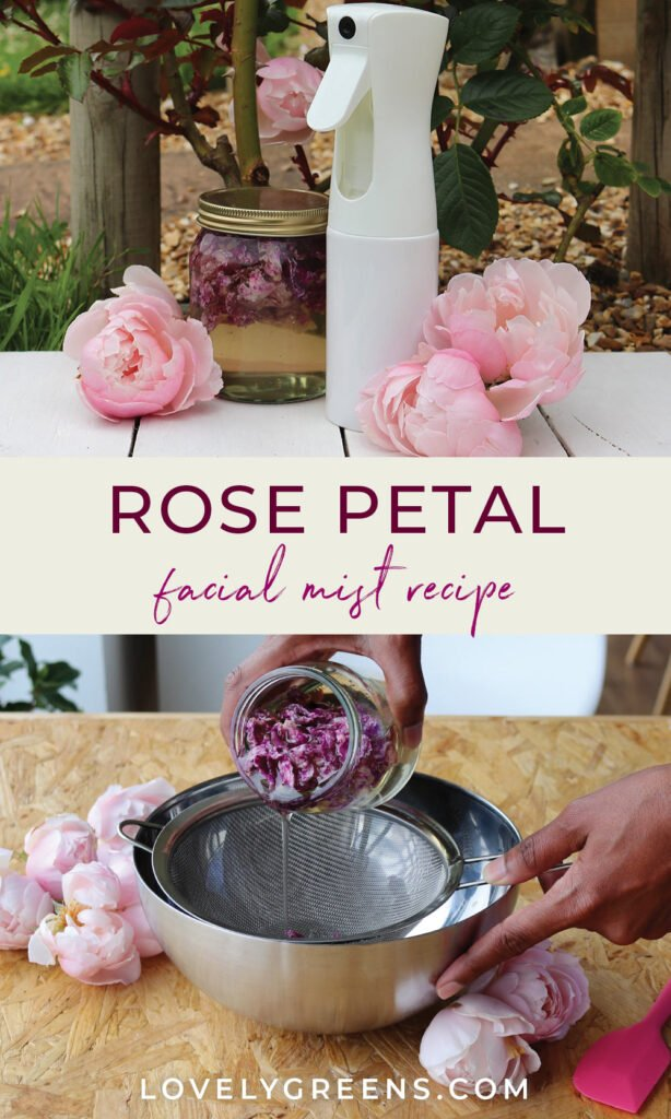 How to make a beautifully scented and refreshing rose petal facial mist with fresh or dried rose petals. Recipe shared from the book, A Woman's Garden Grow Beautiful Plants and Make Useful Things #skincarerecipe #diybeauty #roserecipe