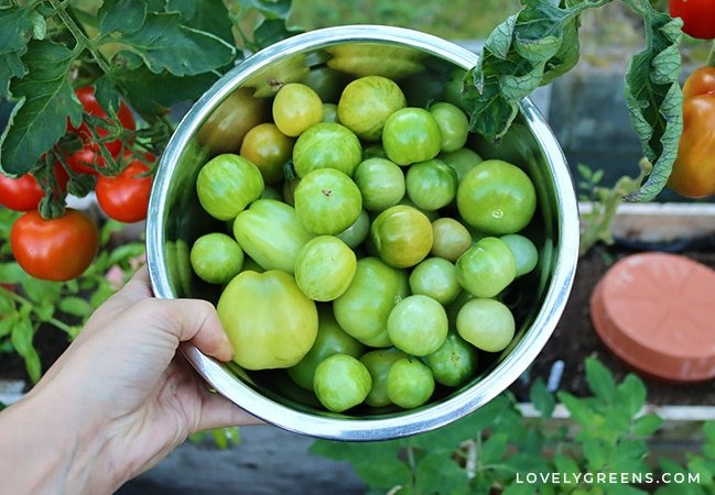 It has a classic relish flavor, and you can use it in the same way—one of the best green tomato recipes you can make in a jar #canningrecipe #greentomatorecipe