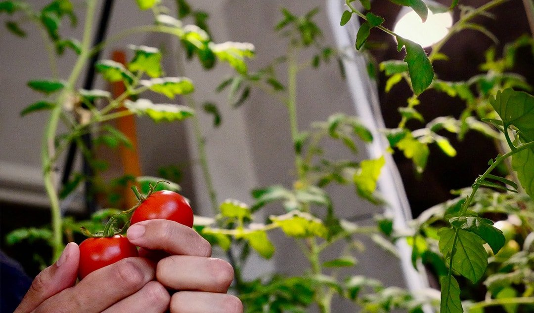 Useful Tips for How to Grow an Indoor Vegetable Garden