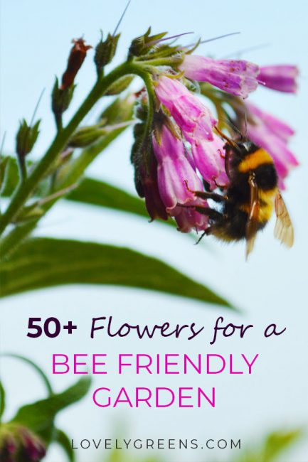 50+ Flowers to grow in a Bee Friendly Garden. Includes flowers that bloom throughout the year from January to December #flowergarden #honeybees #beefriendly #savethebees #wildlifegarden