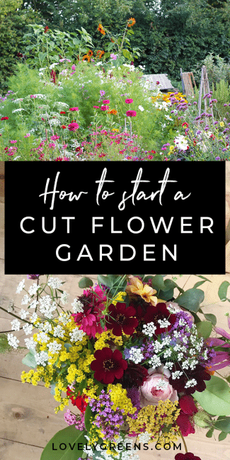 Tips on growing a cut flower garden from gardener and florist Helena Willcocks. Includes how to lay out your garden, amending soil, and why you should be growing Chocolate cosmos #cutflowergarden #growcutflowers #flowers #growweddingflowers
