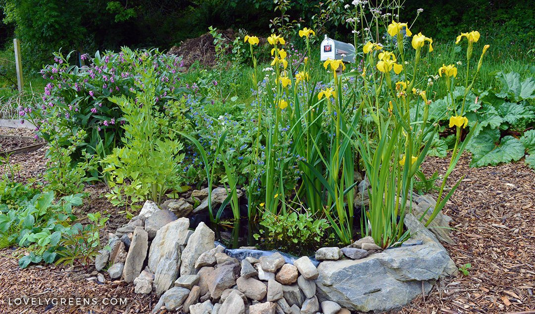 How to build a small pond for the garden lovely greens for Building a small pond