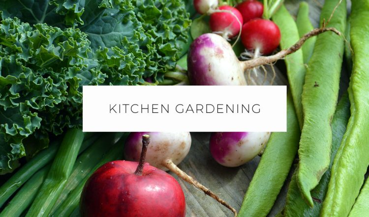 Growing a Kitchen & Skincare Garden