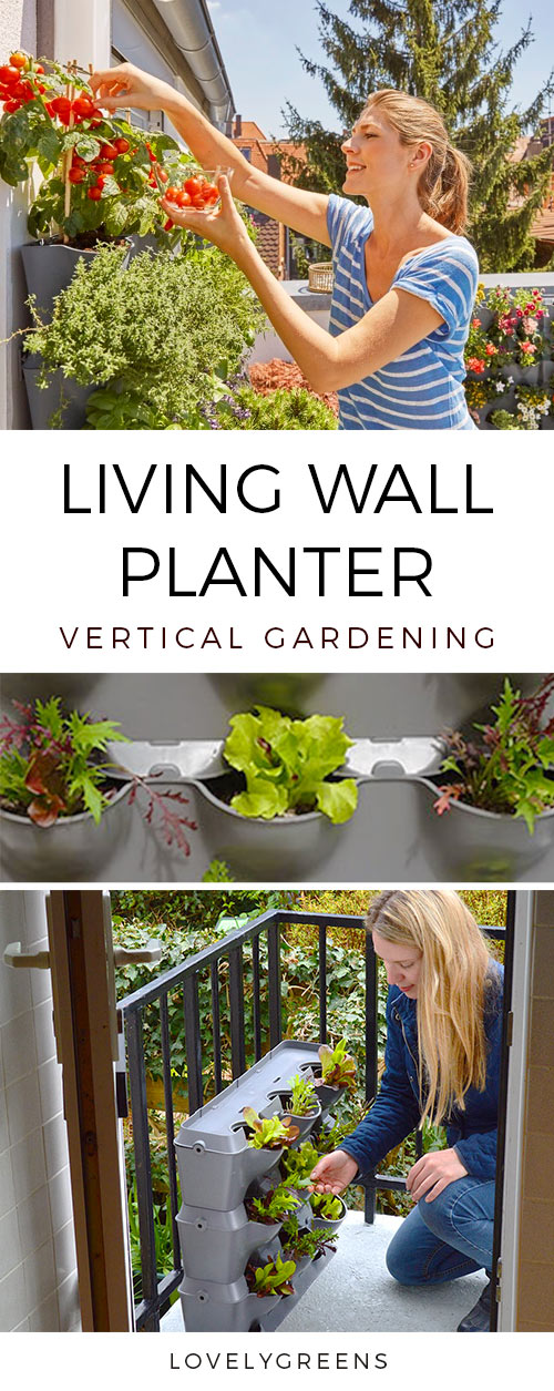 Planting a Living Wall Planter, an update on seedlings growing at home, and planting the sweet peas in the allotment garden #livingwallplanter #verticalplanter #growsweetpeas #springgardeningtasks