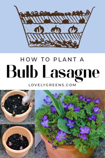 For a long-lasting display of spring blooms, layer bulbs in large pots and containers to create a bulb lasagne. This is a great fall gardening project and will set your garden or patio up for spring color #containergarden #gardeningtips #flowergarden