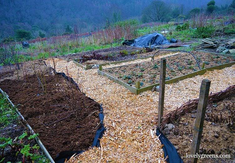Frugal Gardening Idea Create Wood Chip Garden Paths
