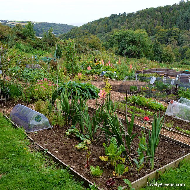tips for starting a vegetable garden in the fall - How To Start A Vegetable Garden From Scratch
