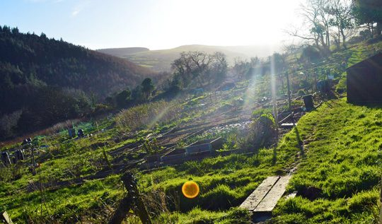 The Allotment Garden in March