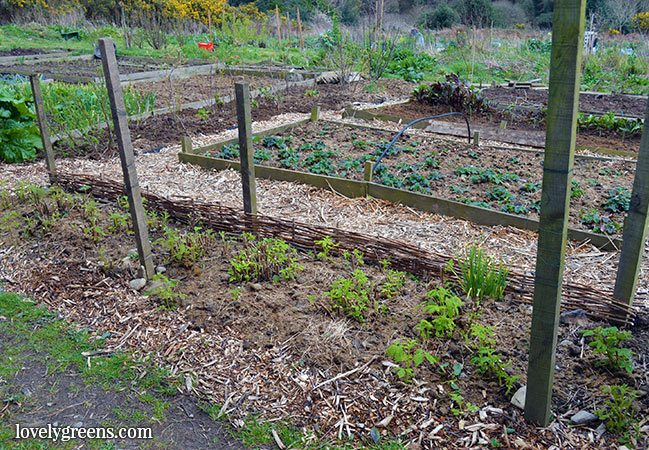 Jobs for the vegetable garden in early April