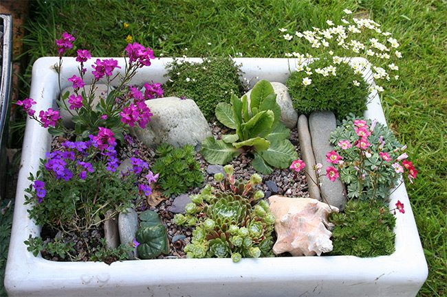 a variety of alpine plants and flowers along with shells and rocks in a vintage sink