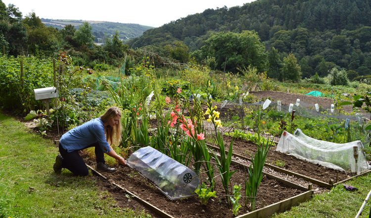 Video: A Tour of our Organic Allotment Garden
